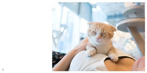 anime bertema idol terbaik painyan photo book bertema kucing oppai akiba nation