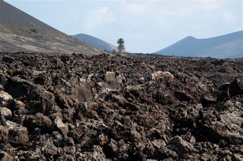 volcanic sand typical arid volcanic soil with cactus plant in lanzarote