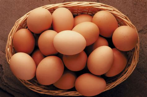 hatchery choice brown egg layers by purely poultry