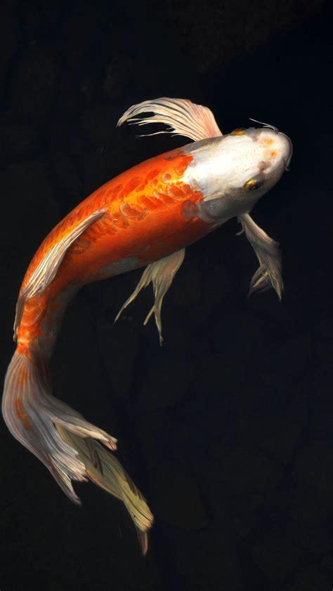 wallpaper iphone fish iphone 7 fish wallpapers free download