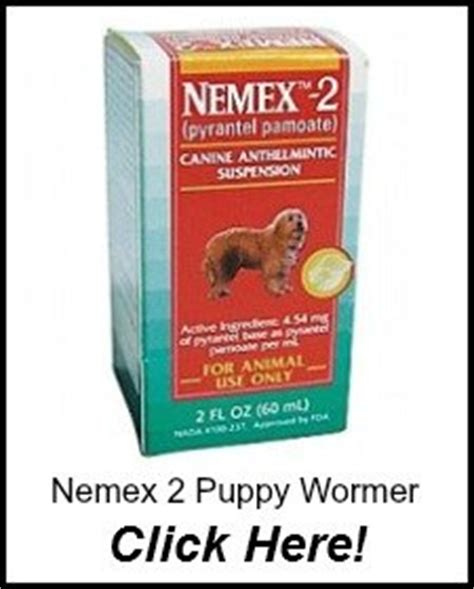 dewormer for newborn puppies worming puppies