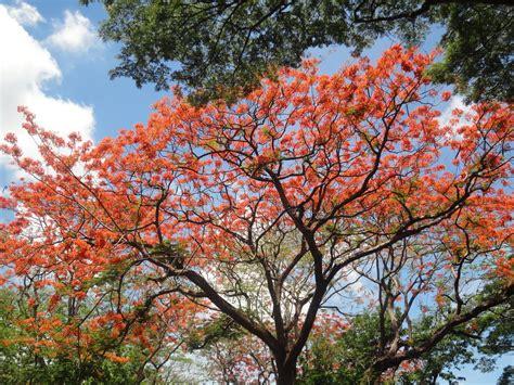 o tree blooming trees silly metamorphosis