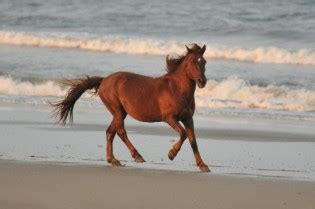 how long does a horse live how long does
