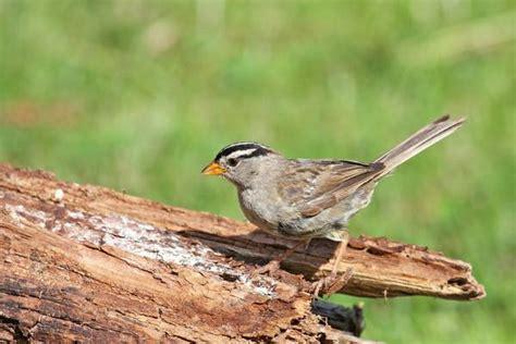 birds of upper land park in sacramento