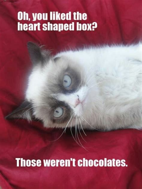 Grumpy Cat Meme Valentines Day - 402 best images about tard on pinterest cats grumpy