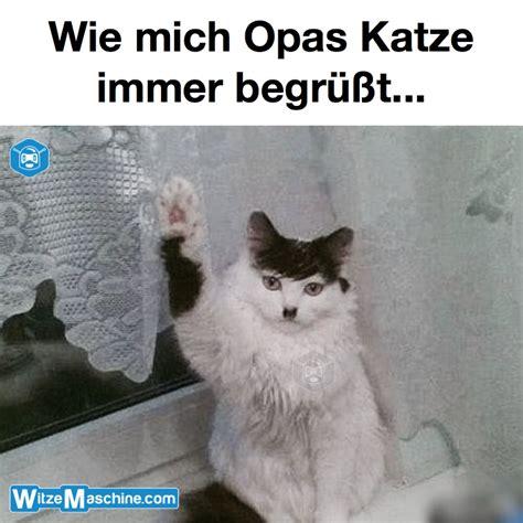 Katzen Meme - opas adolf hitler katze lustige katzenbilder