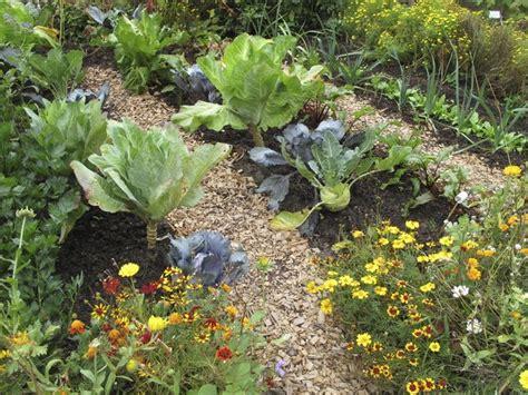 guide  planting  vegetable garden  texas hunker