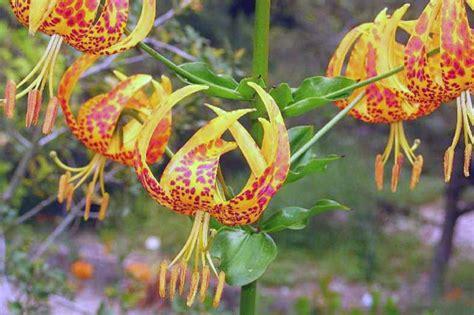 fiori di bach bologna edward bach rimedi floreali psicoterapeuta bologna saffi