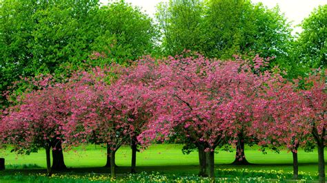 wallpaper abyss spring pink trees in spring full hd wallpaper and background