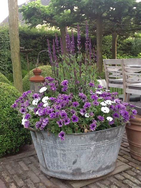 best 25 zinc planters ideas on potted trees