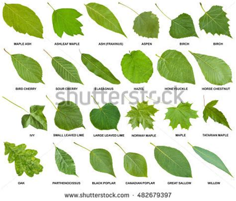 leaf pattern names collection various tumbled gemstones names isolated stock