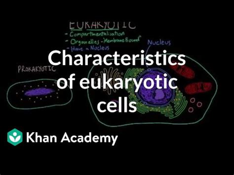 characteristics  eukaryotic cells video khan academy