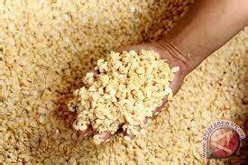 Bungkil Kedelai Kering manfaat kedelai distributor bahan pakan ternak hijauan