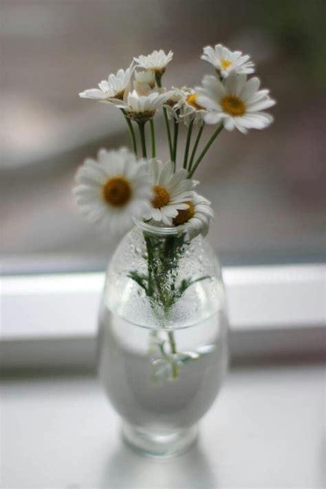 Daisies In A Vase by Daisies In Vase Flowers Daisies Wildflowers