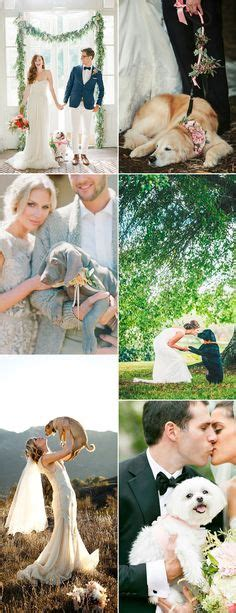 Wedding For Your Beloved Pet by 1000 Images About Friendly Weddings On