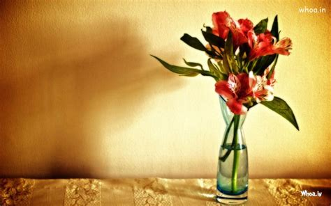 wallpaper flower in pot red flower pot hd wallpaper
