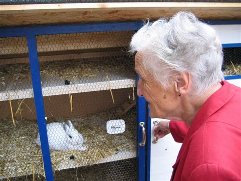 Cleaning Rabbit Hutch rabbit hutch cleaning maintenance guide coops cages coops and cages