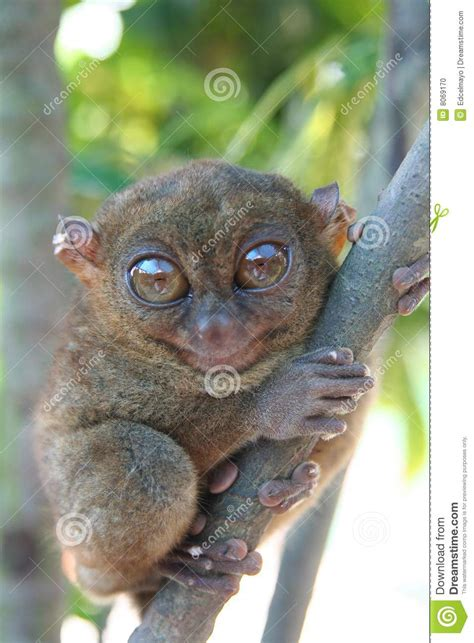 the smallest creatures a fateful road trip of murder mystery and suspense books the smallest primate stock photo image 8069170