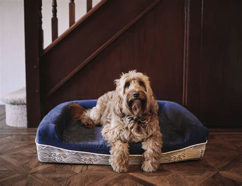 best dog bed the world s best dog bed by ralph co 187 gadget flow