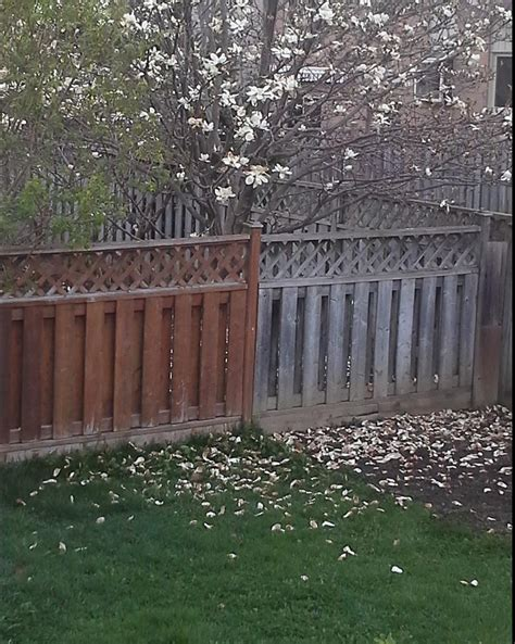 stain   Cleaning and staining a fence with segments of