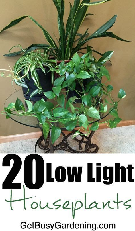 20 low light indoor plants that are easy to grow low