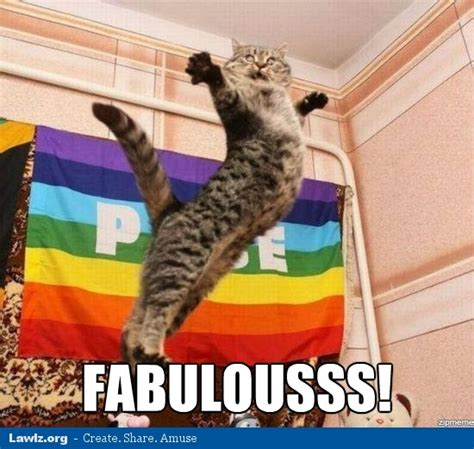 Gay Cat Meme - excited cat memes image memes at relatably com