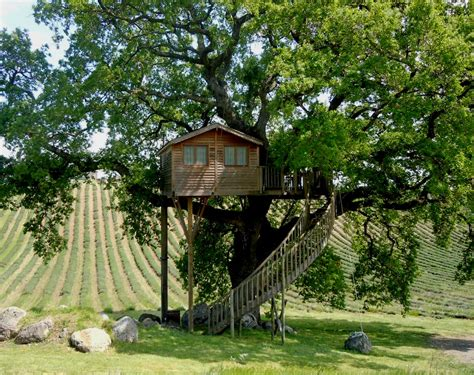 dormire casa sull albero dormire nelle sugli alberi