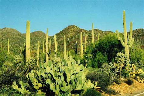 Home Planer organ pipe cactus national monument arizona travel world