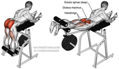lower back pain bench press machine reverse hyperextension usually just known as the