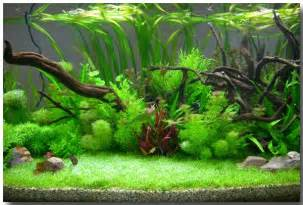 Ideas, Fish Tanks, Freshwater Plants, Aquariums Ideas, Plants