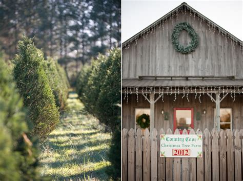 beauch family country cove christmas tree farm