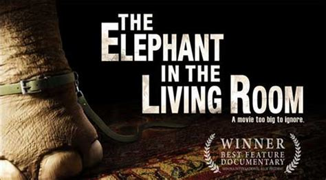 the elephant in the living room documentary rip the elephant in the living room dvd movie with magic