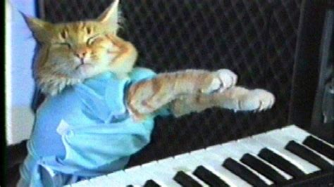 Cat Playing Piano Meme - weekend events soul singer judith hill performs in