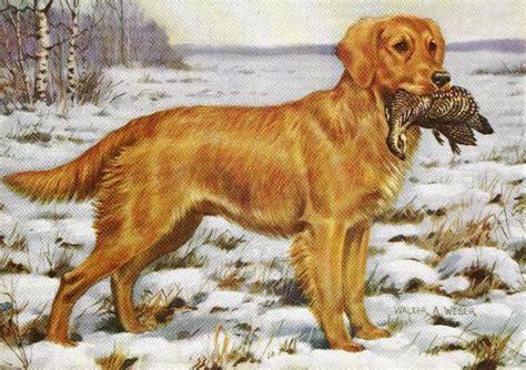 golden retriever nationals golden retriever vintage prints gifts and artwork from dogsonthenet