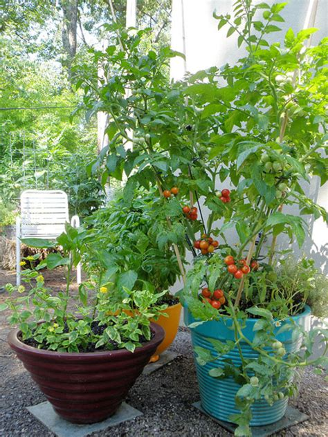 Growing Tomatoes In Planters by 5 Smart Ways For Growing Tomatoes In Pots
