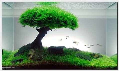 Mos Pelia Agar Agar moss dan kayu perpaduan sempurna untuk aquascape smartf41z