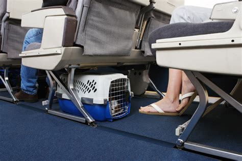 top 5 pet friendly airlines