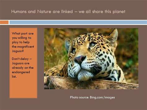 debbies blog jaguars   endangered species list