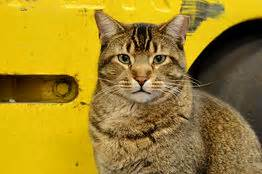 Are Cats The New Must Accessory by The New Must Yard Accessory A Feral Cat Wsj