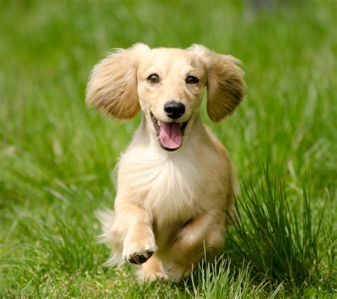 healthy dogs healthy k9 articles
