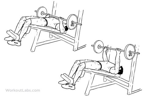 decline bench dumbbell press decline barbell bench press illustrated exercise guide