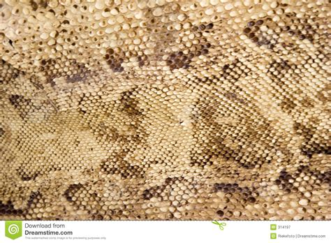 skin closeup stock images royalty free images vectors snake skin closeup stock image image of pattern snaking 314197