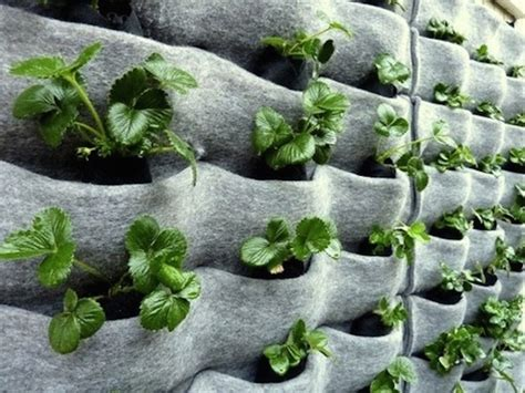 vertical garden plans climbing up 10 innovative vertical garden ideas urban