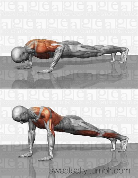 What Muscles Does Bench Press Work Uwo Fitness