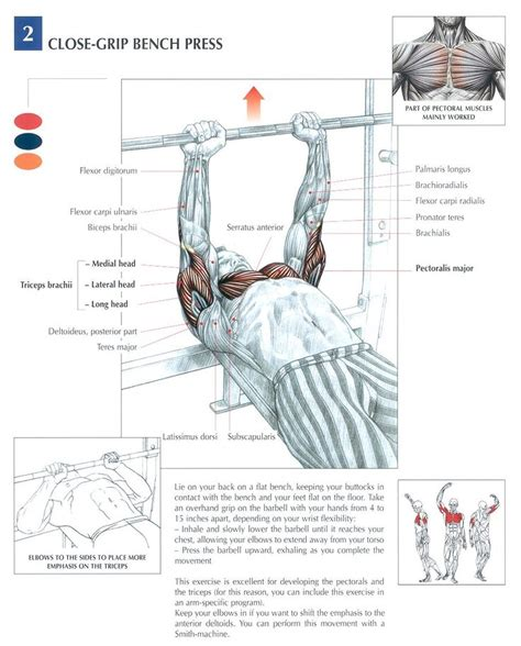 best bench press workout for mass 1000 images about fitness on pinterest cable triceps
