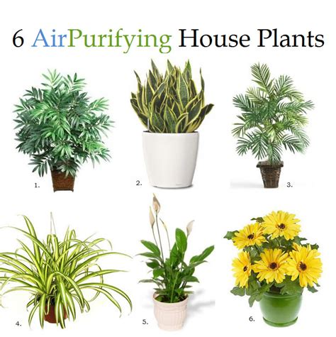 best houseplants for air quality these 6 house plants can remove impurities from the air