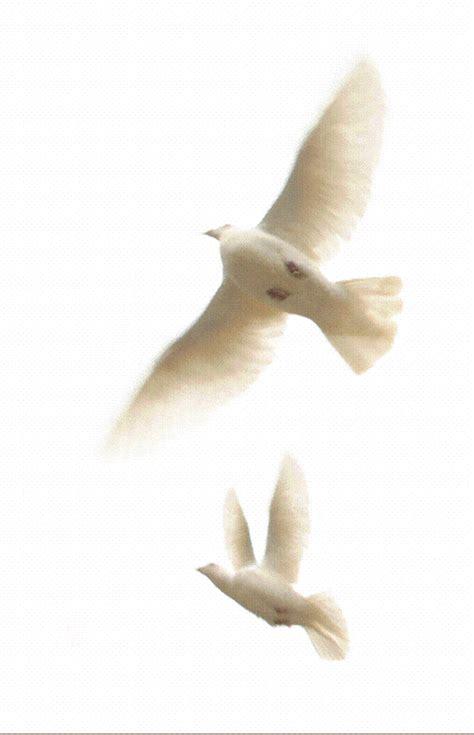 ransel mon flying doves gif by kirstybek photobucket
