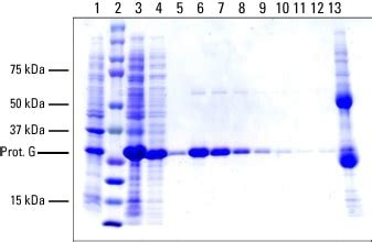 protein l hrp protein purification free test deduon