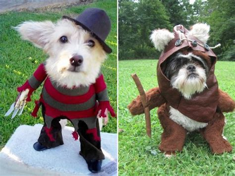 awesome dog halloween costume  inspire