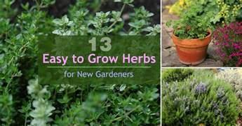 13 easy to grow herbs for new gardeners balcony garden web